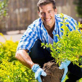 حديقة المنزل : كيف تقوم بالإعتناء بها أثناء أشهر الصيف الحارة