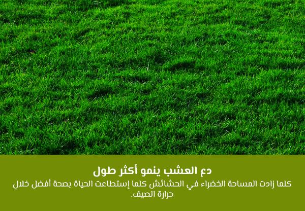 دع العشب ينمو أكثر طولاً