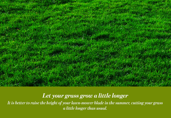 Let your grass grow a little longer