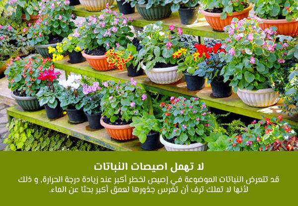 لا تهمل اصيصات النباتات