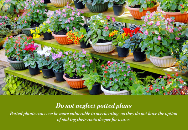 Do not neglect potted plans
