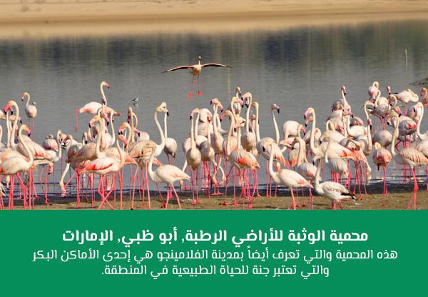 محمية الوثبة للأراضي الرطبة, أبو ظبي, الإمارات