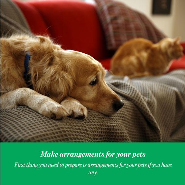Make arrangements for your pets