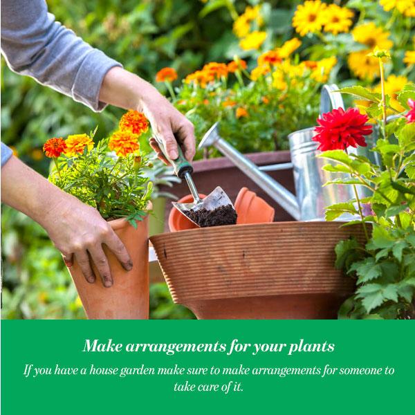 Make arrangements for your plants