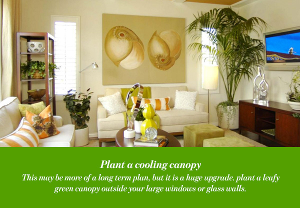 Plant a cooling canopy