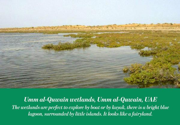 Umm al-Quwain wetlands, Umm al-Quwain, UAE