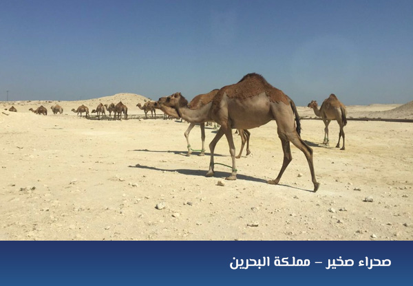 صحراء صخير – مملكة البحرين
