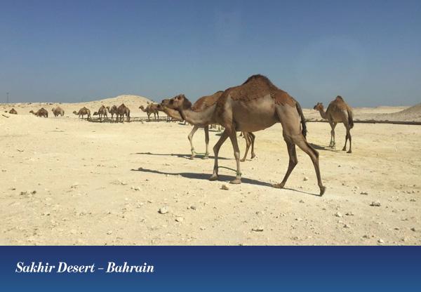 Sakhir Desert – Bahrain