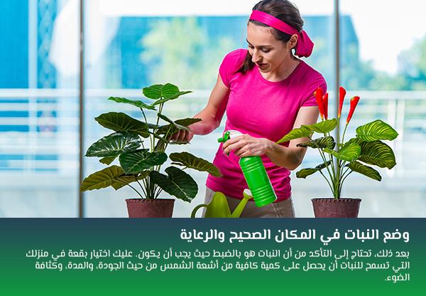 وضع النبات في المكان الصحيح والرعاية