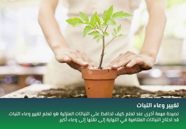 تغيير وعاء النبات