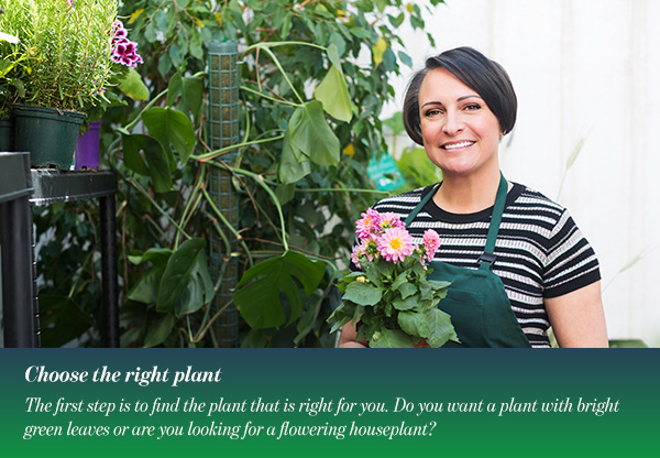 Choose the right plant