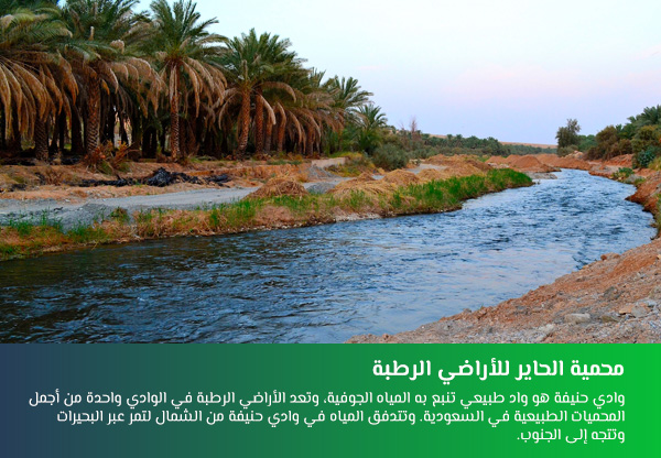 محمية الحاير للأراضي الرطبة