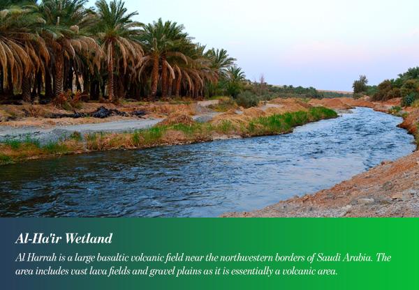 Al-Ha'ir Wetland