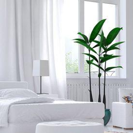 في ضوء الشمس: دليلك لمعرفة كيفية إدخال المزيد من الضوء إلى منزلك