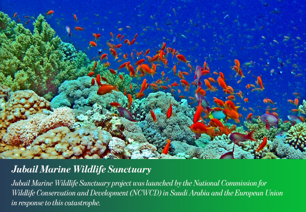 Jubail Marine Wildlife Sanctuary