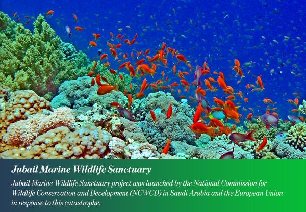 Jubail Marine Wildlife Sanctuary