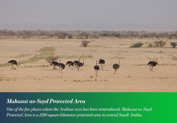 Mahazat as-Sayd Protected Area