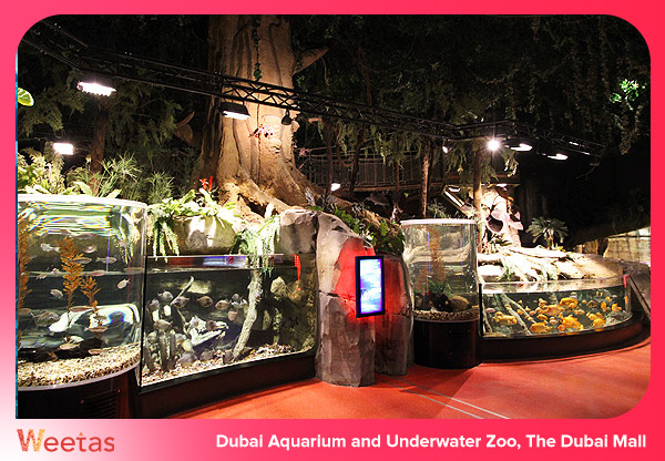 Dubai Aquarium and Underwater Zoo, The Dubai Mall