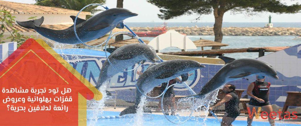 منتجع الدولفين البحرين