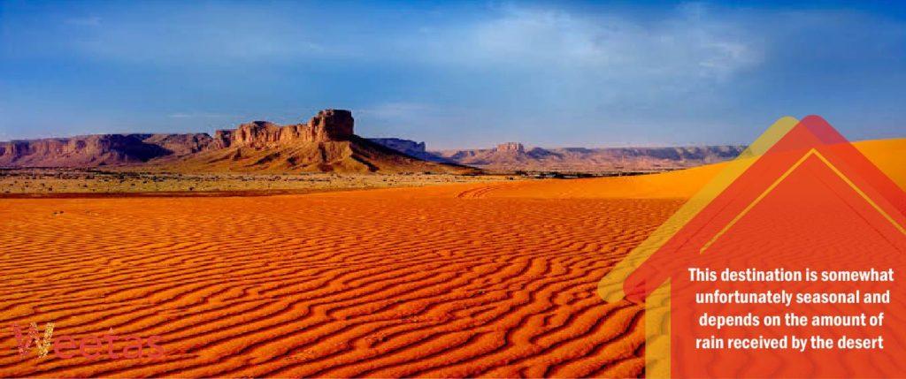 Red Sands Flower Fields