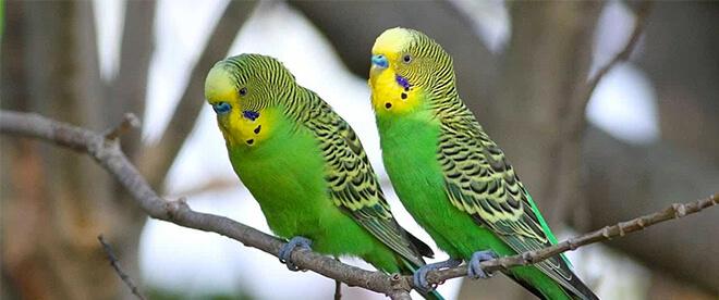 مملكة طيور العزيزية